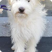 Adopt A Pet :: Monroe - Palo Alto, CA