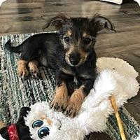 Adopt A Pet :: Charlie (in adoption process) - El Cajon, CA