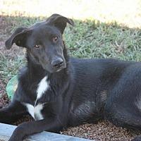 Adopt A Pet :: Salem - Jewett City, CT