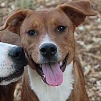 Adopt A Pet :: GRASSHOPPER - Red Bluff, CA