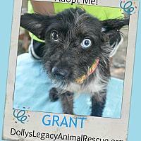 Adopt A Pet :: GRANT - Lincoln, NE