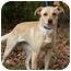 Photo 3 - Labrador Retriever Dog for adoption in Montgomery City, Missouri - Bambi