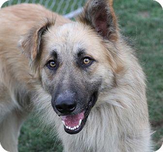 I Love My Dog Rescue Sacramento Ca
