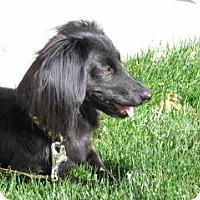 Adopt A Pet :: RAMSEY - Riverside, CA