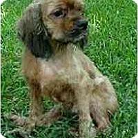 Adopt A Pet :: Matt - Sugarland, TX