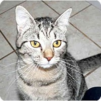 Adopt A Pet :: Sammie - Painesville, OH