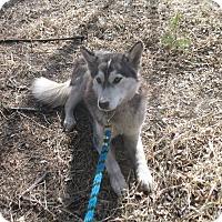 Adopt A Pet :: Thelma - Egremont, AB