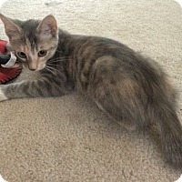 Adopt A Pet :: Lacey - The Colony, TX