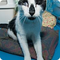Adopt A Pet :: Ariana - New York, NY