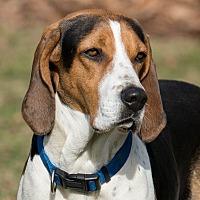 Adopt A Pet :: Sammi - Westfield, NY