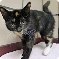 Adopt A Pet :: SALLY - Fort Wayne, IN