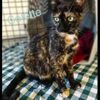 Adopt A Pet :: Colette - Jasper, IN