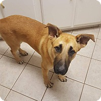 Adopt A Pet :: Leroy - East Hartford, CT