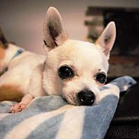 Adopt A Pet :: Buttercup-Bonded to Wesley - Maple Grove, MN