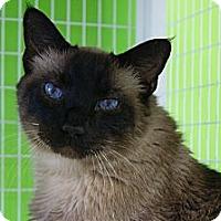 Adopt A Pet :: Simon - Memphis, TN