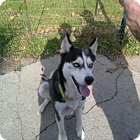 Adopt A Pet :: Loki ~ Adoption Pending - Youngstown, OH