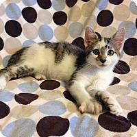 Adopt A Pet :: Decan - Coral Springs, FL