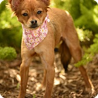 Adopt A Pet :: Gingersnap - Rancho Palos Verdes, CA