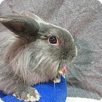 Adopt A Pet :: Luca - Newport, DE