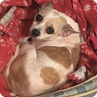 Adopt A Pet :: Meeka - Knoxville, TN