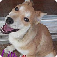 Adopt A Pet :: Lilly - Adoption Pending Congrats Corey & Leslie! - Bowie, MD