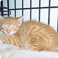 Adopt A Pet :: MARSHALL - Medford, WI