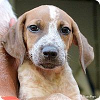 Adopt A Pet :: Oakley - Bedford, VA