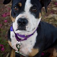 Adopt A Pet :: Brynn - Atlanta, GA