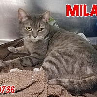 Adopt A Pet :: Mila - Oak Ridge, TN