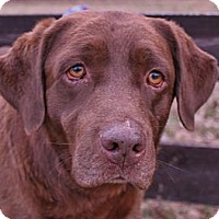 Adopt A Pet :: Bailey - Good Hope, GA