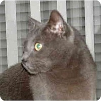 Adopt A Pet :: Smokey Joe - Newburgh, NY