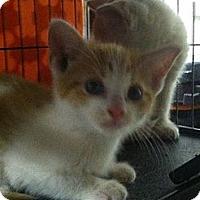 Adopt A Pet :: Aslan - Island Park, NY