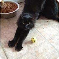 Adopt A Pet :: Tabitha - Mobile, AL