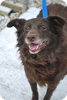 Spaniel (Unknown Type) Mix Dog for adoption in Berea, Ohio - Lester