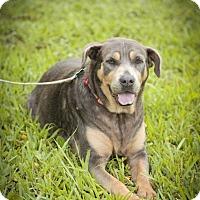 Adopt A Pet :: Suzy <3 - Davie, FL