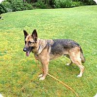 Adopt A Pet :: Anton*ADOPTION PENDING* - Mill Creek, WA