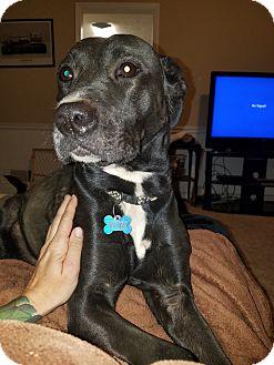 Labrador Retriever Mix Dog for adoption in Roswell, Georgia - Pippa