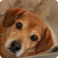 Hound (Unknown Type) Mix Dog for adoption in Fort Smith, Arkansas - Flash