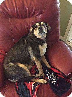 Shepherd (Unknown Type) Mix Dog for adoption in Astoria, New York - Shiloh