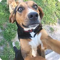 Adopt A Pet :: Henie - Stoneham, ME
