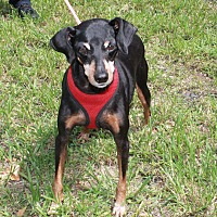 Adopt A Pet :: J.R - Boca Raton, FL