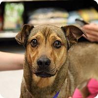 Adopt A Pet :: Sheldon - Wilmington, NC