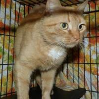 Adopt A Pet :: Cayenne - Meadow Lake, SK