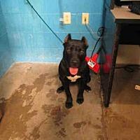 Adopt A Pet :: ASH - Olivette, MO