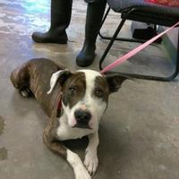 Adopt A Pet :: PATCH - Los Lunas, NM