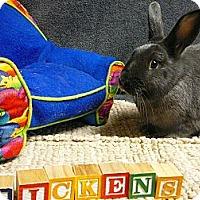 Adopt A Pet :: Dickens - Newport, DE
