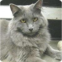 Adopt A Pet :: Raja - Mesa, AZ