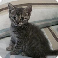 Adopt A Pet :: Olivier - Reston, VA