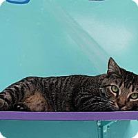 Adopt A Pet :: Luca - Newport Beach, CA