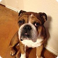 Adopt A Pet :: Maxwell - Cibolo, TX